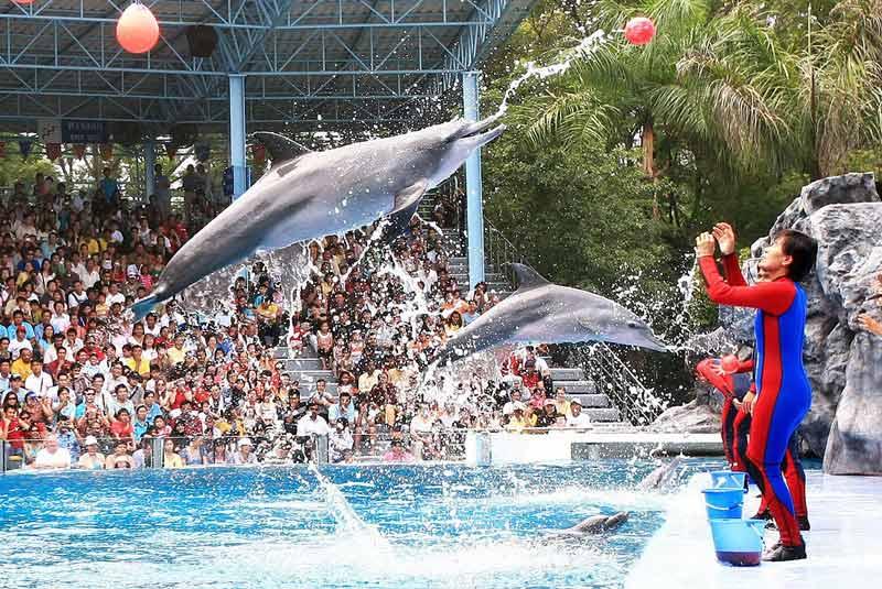 با باغ وحش سافاری و پارک دریایی بانکوک بیشتر آشنا شوید
