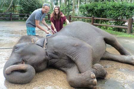 گردش با فیل ها در تور بالی