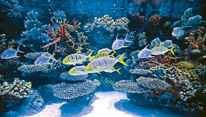 آکواریوم آنتالیا (Antalya Aquarium)