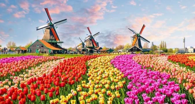 اگر به گل علاقمندید سفر به هلند رو تجربه کنید