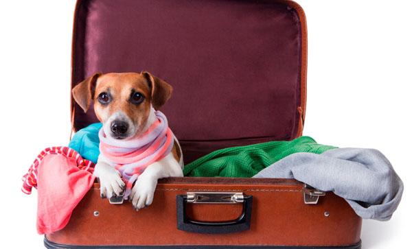 قوانین حمل حیوان خانگی در هواپیما
